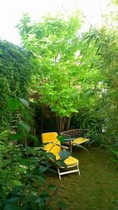 Kugel Trompetenbaum Schneiden : gold trompetenbaum 39 aurea 39 catalpa bignonioides 39 aurea ~ Lizthompson.info Haus und Dekorationen