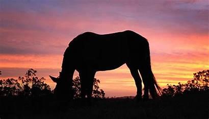 Horse Horses Sunset Gifs Equine Snack