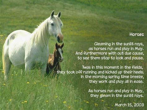 poems horse horses quotes poem poetry short quotesgram thoroughbred sense friends funny sayings equestrian yahoo poemsearcher