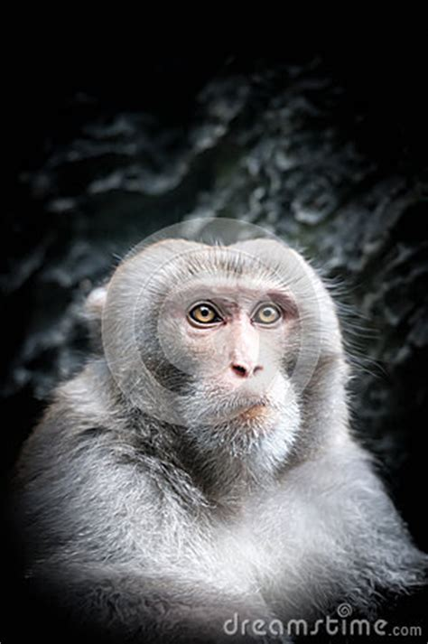 Portrait Of Cute Little Monkey With Serious Face. Stock