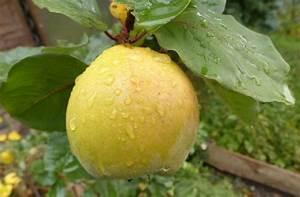 Wann äpfel Ernten : der richtige erntezeitpunkt ist da die farbe wechselt von ~ Lizthompson.info Haus und Dekorationen