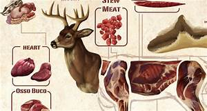 Deer Meat Butchering Diagram  Do You Know All Your Deer Parts