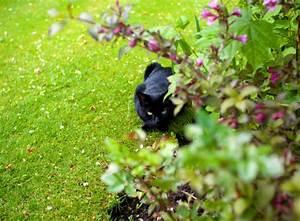 katzen im garten ungebetene gaste verscheuchen garten With französischer balkon mit katzen im garten verscheuchen