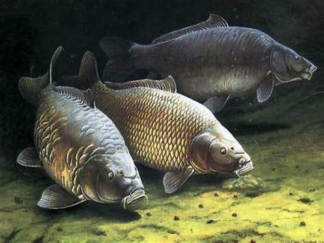 la pêche à la carpe par peoria carp hunters buzz sports et