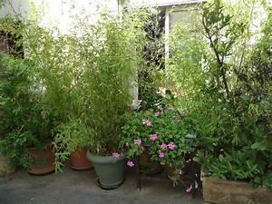 Bambou En Pot Pour Terrasse : planter des bambous en pot sur une terrasse pivoine etc ~ Louise-bijoux.com Idées de Décoration