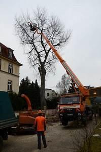 Was Kostet Baum Fällen : leistungen baumfllung mit hubsteiger seilklettertechniker oder kran ~ Orissabook.com Haus und Dekorationen