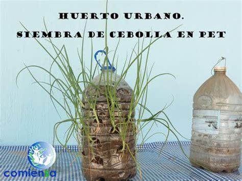 se faire des potes huerto urbano siembra de cebolla en pet