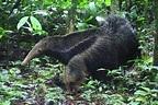 Videos reveal rare birds, wild monkeys, and jaguar family ...