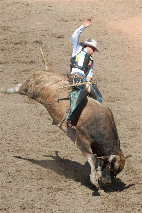 bull riding  ride   life writework