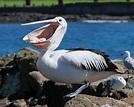 Marine Bird - Marine Biology
