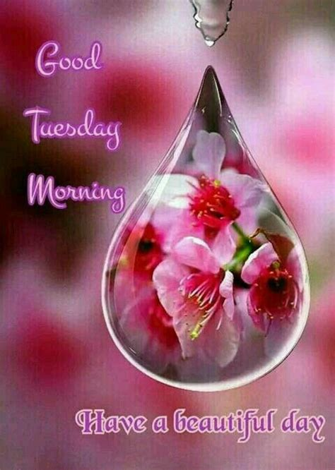 good tuesday morning pictures   images