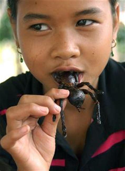 insekten und spinnen seite  allmystery