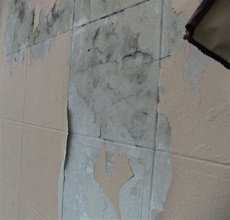 painting   How do I prepare this exterior concrete wall