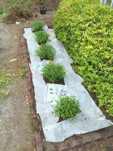 prevent weeds  newspaper  mulch ugly