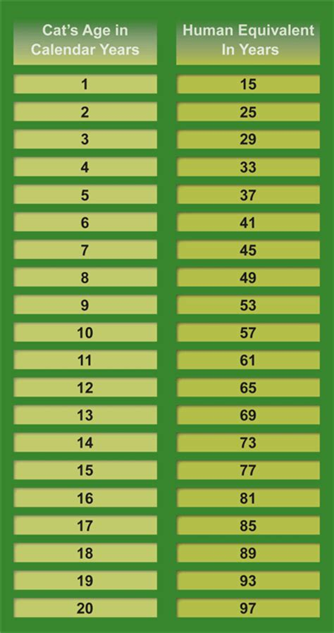 cat years chart how old is my cat helping your cat live a long healthy life