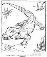 Coloring Alligator Pages Zoo Printable Animal Preschool Sheets Sheet Animals Raisingourkids Printing Crocodile Alligators Adult Getcoloringpages Crocodiles Rebels Royal Ever sketch template