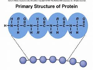 What Are The Levels Of A Protein Structure