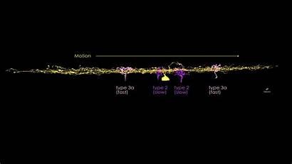 Retina Motion Duck Cells Eyewire Gamers Bipolar