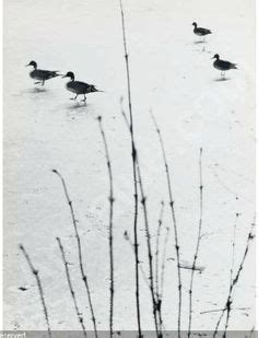images  aart klein masters  photography