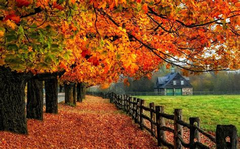 Pretty Fall Wallpaper Iphone 7 by Fall Trees Wallpaper 1920 215 1200 Laptop Style24x7