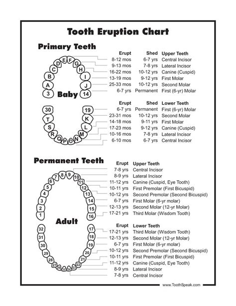 Tooth Diagram Chart by Baby Tooth Chart Document Sle Baby It S Time