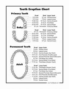 Top 25 Ideas About Teeth On Pinterest