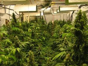 Indoor Marijuana Grow Rooms