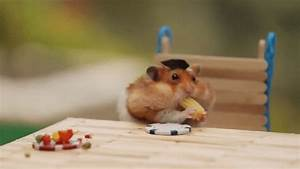 Tiny Hamster39s Tiny BBQ Ep 8 Find Make Share