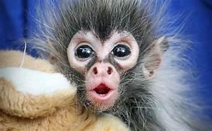 Look Who's Hangin' Around: Spider Monkey Babies! | Baby ...