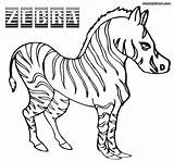 Zebra Coloring Pages Sheet Animal Wild Coloringway sketch template