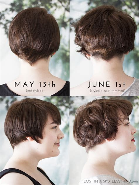 growing   pixie cut  plan lost   spotless mind
