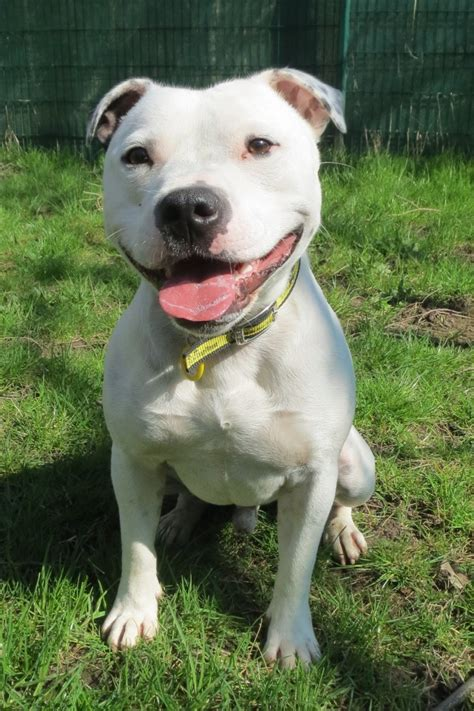 dogs trust waggy tailed west calder  alikes
