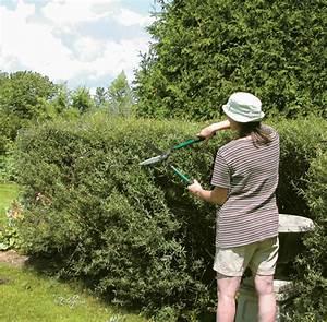 Quand Tailler Les Arbustes De Haies : comment tailler une haie trucs et conseils jardinage ~ Dode.kayakingforconservation.com Idées de Décoration