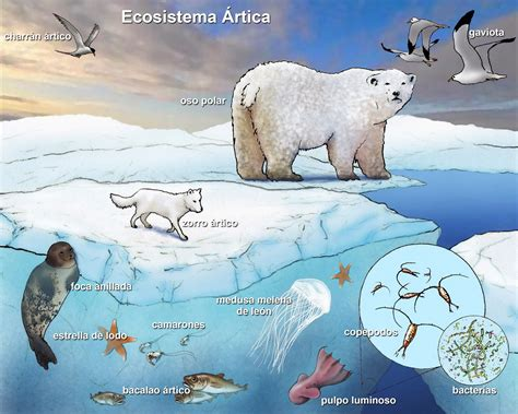 Grade 9 Science Nov 22 Introduction To Ecology