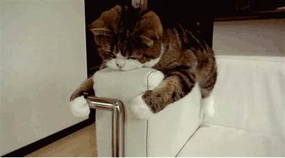 Lazy Couch Gifs