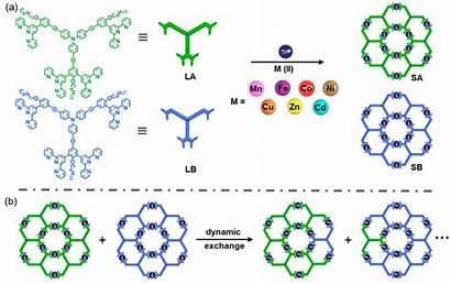 Assembly Self Hexameric Lb Fractals Seven Through