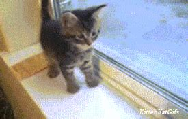 Cute Cat Gifs  Find & Share On Giphy