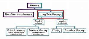 Long Term Memory Dynamicbrain