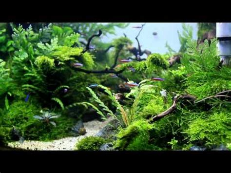 Aquascape Designs For Aquariums by Aquascape Quot Naturalman Aquarium Design Quot 2014