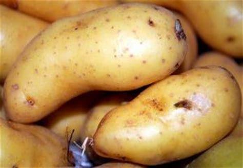 terre pommes production tout
