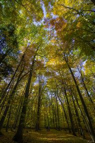 2015 Fall Colors Michigan