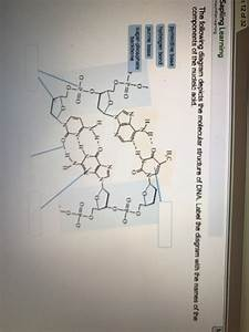 33 The Following Diagram Depicts The Molecular Structure