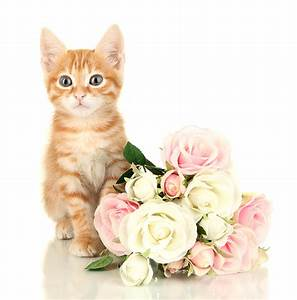 Learn about Flowers Toxic To Cats