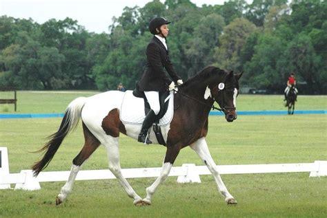salto jumping horses caballos horse mejores chevaux obstacles warmblood meilleurs saut obstaculos oldenburg expertoanimal selle francais cavalos sur francesa sela