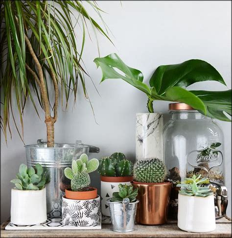 plantes chambre conseils déco chambre exotique made in meubles