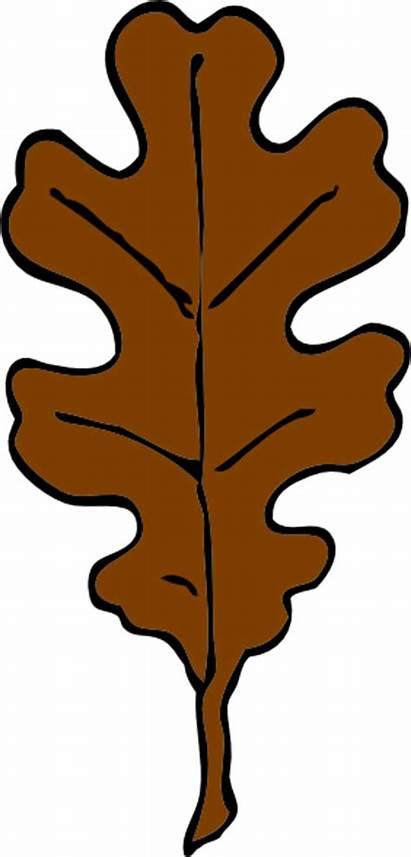 Leaf Brown Clipart Oak Clip