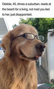 63 Dog Bios That Will Hilariously Remind You Of Somebody ...