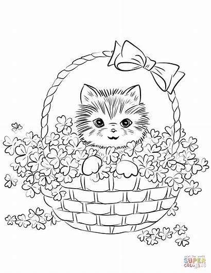 Coloring Kitten Basket Pages Shamrock Printable Drawing