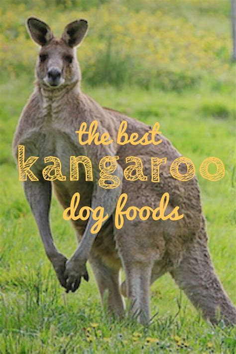 Zignature kangaroo dry dog food is an exceptional source of complete protein as an exotic protein, kangaroo is the healthiest pet food, rich with twice the vitamin b12 of other meats. 5 Best Kangaroo Dog Food Brands: Meals That Hop Up Your ...
