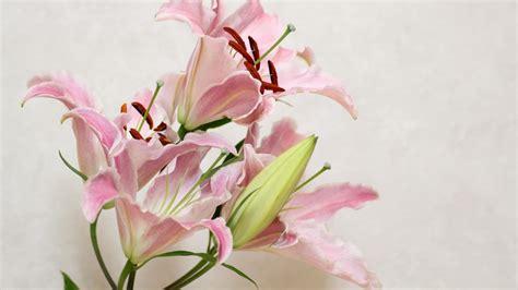 Wordpress Backgrounds beautiful hd lily flowers wallpapers hdwallsourcecom 2560 x 1440 · jpeg